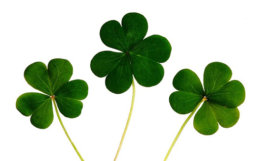5 Lessons on Wonder from St. Patrick