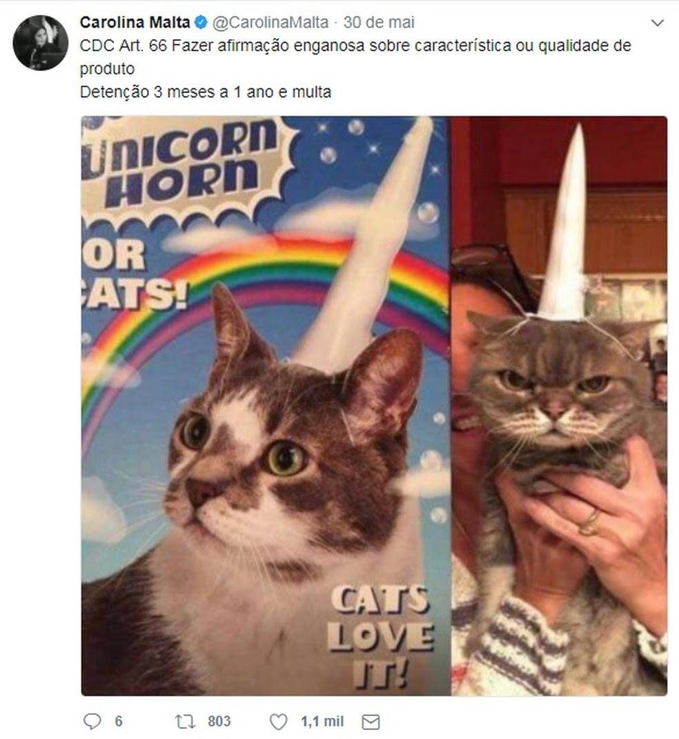 Juíza posta associações divertidas em que os animais 'interpretam' réus para exemplificar a prática de delitos (Foto: Reprodução/Twitter)
