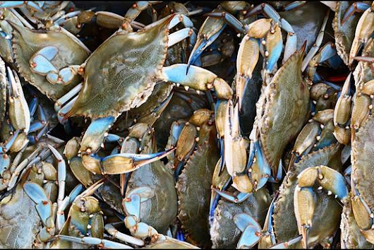 Maryland Blue Crab? Maybe, Maybe Not