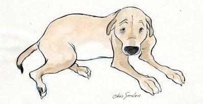 sandersdog.jpg
