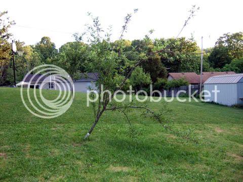 Gardendesk Helping The Apple Tree