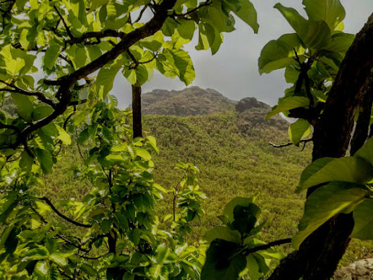 Get To Know About Pachmarhi: The Queen Of Satpura