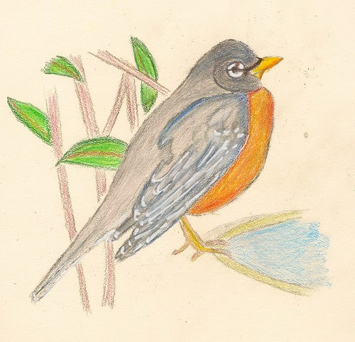Color Pencil Sketch Robin