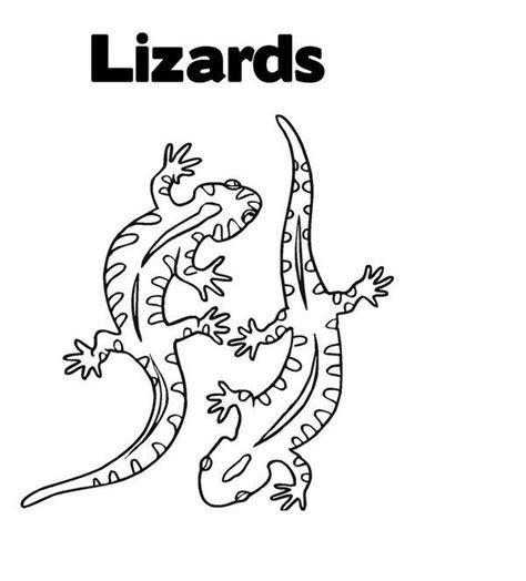 lizard coloring pages picture  suosikkeja