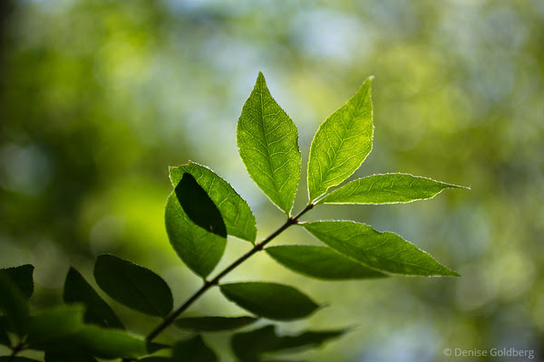 light shining through leaves, patterns