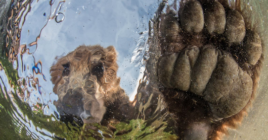 The Winners Of The 2017 National Geographic Nature Photographer Of The Year Contest Are Here, And They're Spectacular