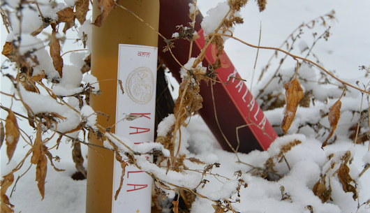 Award Winning Winery Shares How to Make the Perfect Icewine