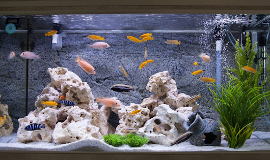 7 Awesome Fish Tank Ideas Every DIY Enthusiast Will Love | UpGifs.com