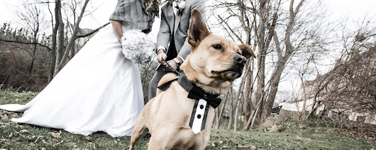 19 Adorable Wedding Dogs
