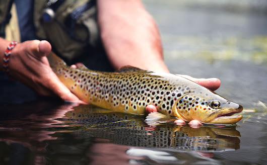 Rodtrip - A memorable dry fly fishing day