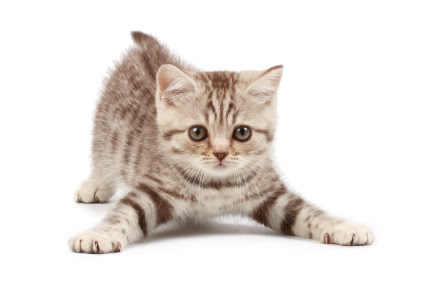 Cats and Exercising: What and How? | Pet Hooligans