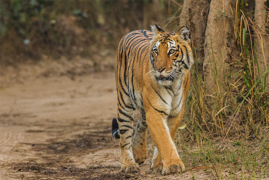 10 Best Wildlife Sanctuaries in India that you must visit • Outside Suburbia