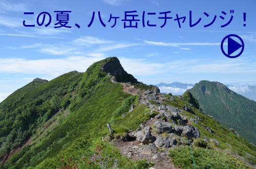 八ヶ岳の登山ガイド Yatsuトレッククラブ