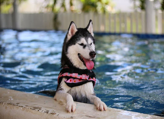 Chlorine in Pools: Is it Safe for Pets?