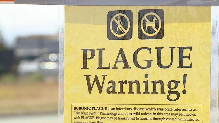 Plague confirmed in 6 Colorado counties after child's death