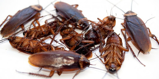Affordable Pest Management Services From Pest Control Company Perth PressRelease.com