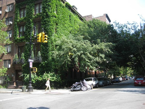 Tree lined Street.