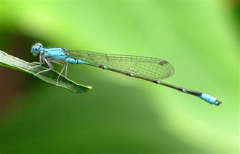 animated dragonfly wallpaper wallpapersafari