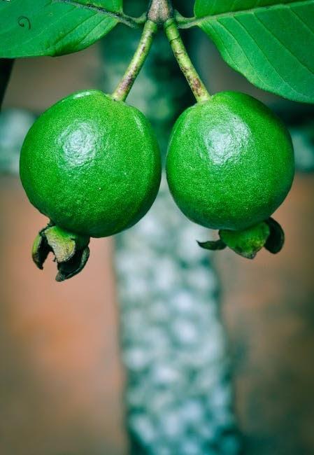 Amazing Health Benefits Of Guava :
