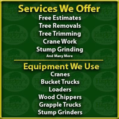 Tree Service Clearwater Fl | Removal Company Serving Pinellas County | Happy's Tree Service, LLC