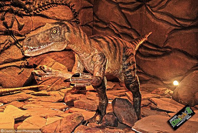Veloceraptors