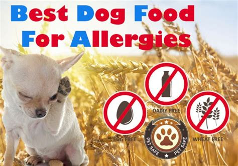 dog food  allergies  guide  finding