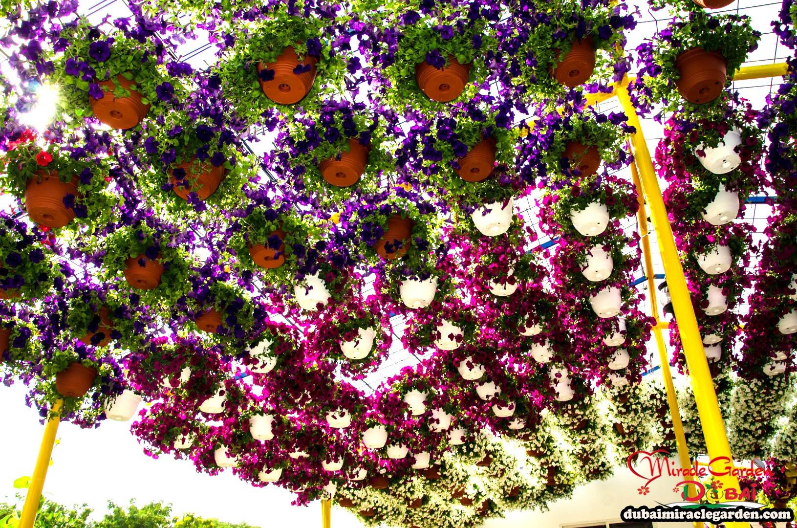 Dubai Miracle Garden 15