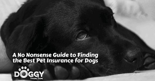 A No Nonsense Guide to Finding the Best Pet Insurance for Dogs