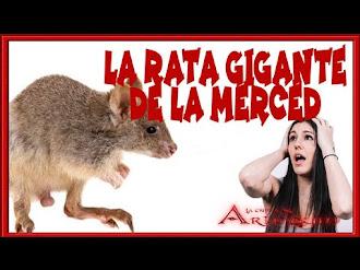 LA RATA GIGANTE DE LA MERCED, MÉXICO