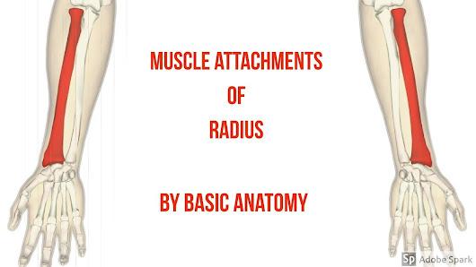 Basic Anatomy - Google+
