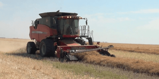 Canola School: Harvest Management — It's Not All or Nothing - Real Agriculture
