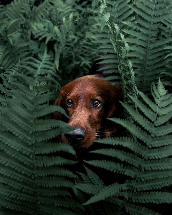 La vie secrète de Troja-photographie-George
