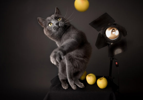 03 Cat Perfectly Timed Animal Photography in 20 Examples of Perfectly Timed Animal Photography