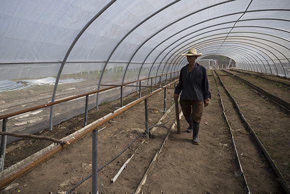 Área de semillero tecnificado El Tamarindo. Foto: Irene Pérez/ Cubadebate.