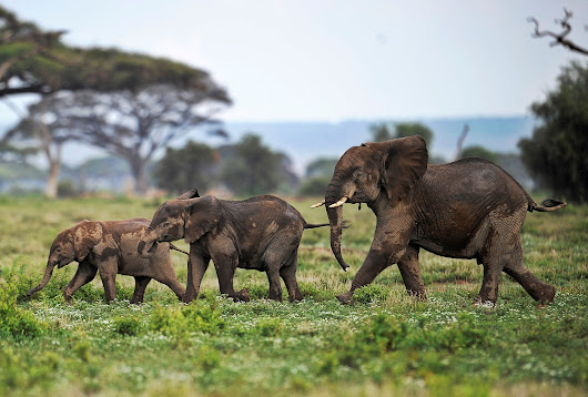World Elephant Day seeks to raise awareness about the endangered species