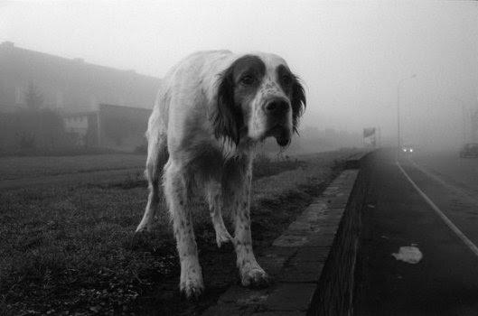 Los perros son humanos