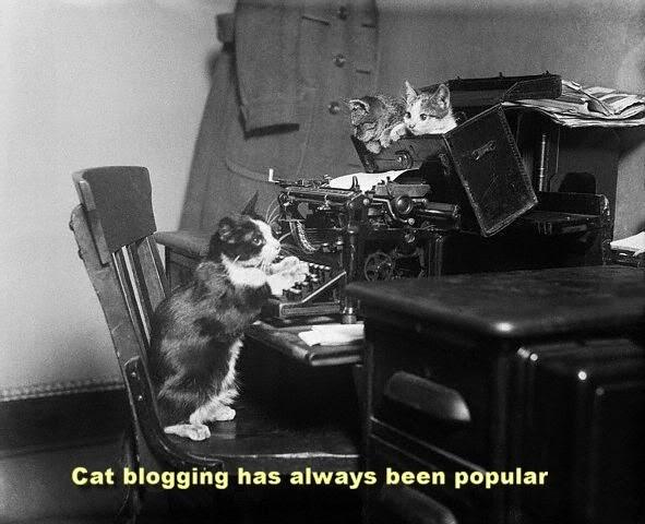 Cat blogging has always been popular.
