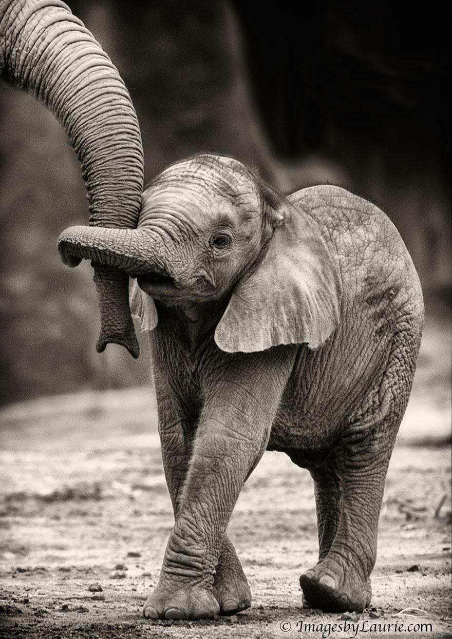 http://www.boredpanda.com/cute-animal-parenting/?image_id=animal-parents-16.jpg