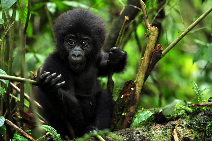 5 days rwanda-Uganda gorilla trekking tours