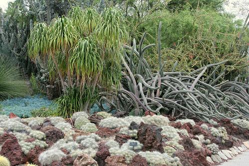 huntington crazy succulents