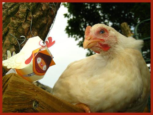 ptsf vinny 02 - Dolly Oblong Custom Nanibird