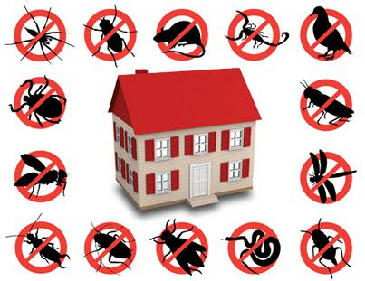 Benefits of Choosing Green Pest Control Method Rather than Others - greenvalleypestcontrol
