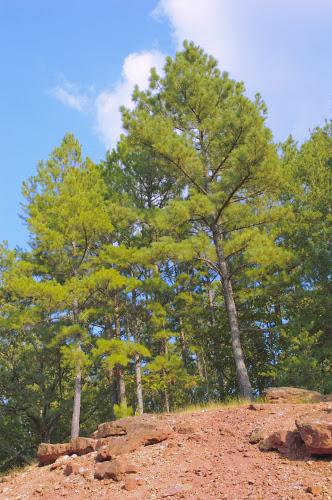 Trees -- Gray World Assumption white balance