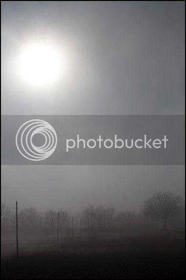 Risultati immagini per nebbia  a jesi