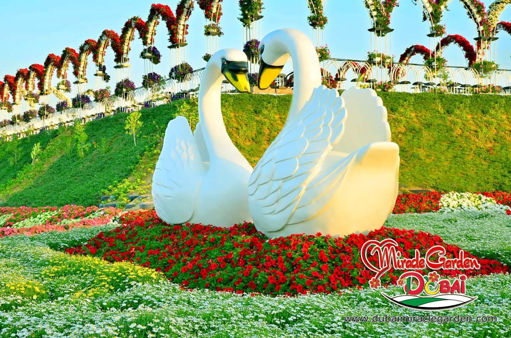 Dubai Miracle Garden 00