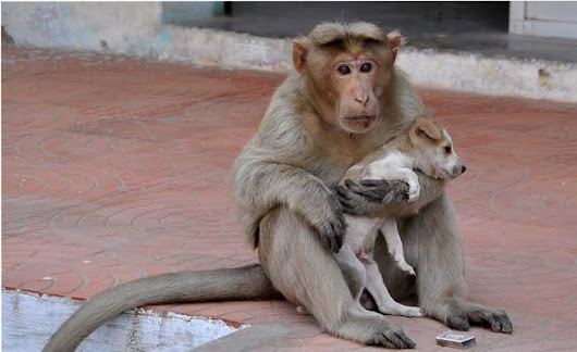 Monkey Adopts Homeless Puppy — And It's Just as Cute as You Suspect