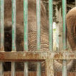 Send the World's Loneliest Elephant to Thailand - The Petition Site