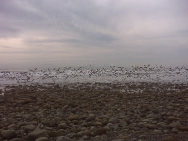 Birds take off! 375