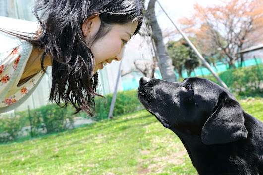 Dogs and humans: Research finds chemistry and gaze deepen the bond