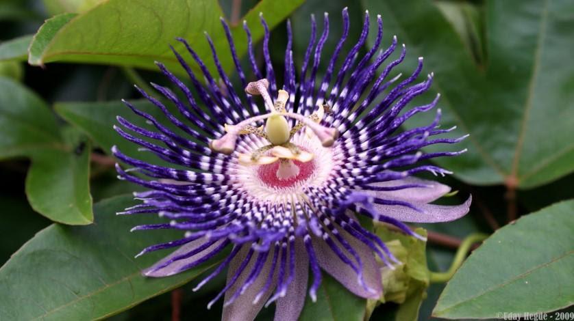 flor bizarra